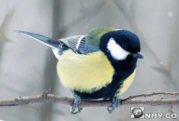 Залетевшая в дом птица