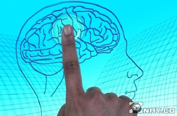 Развитие человеческой памяти