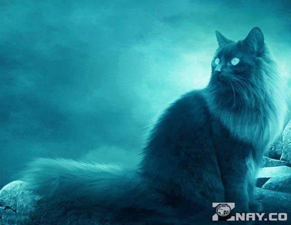 Кот увидел призраков