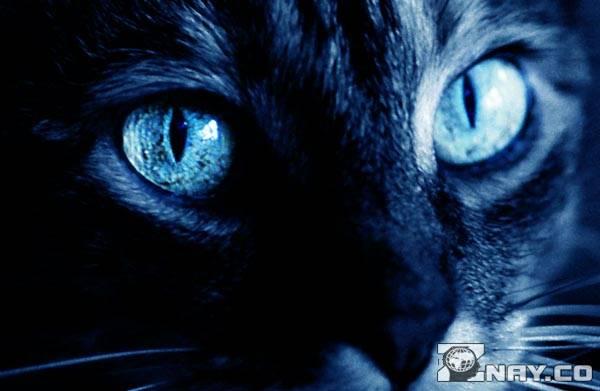 Кошачьи зрачки
