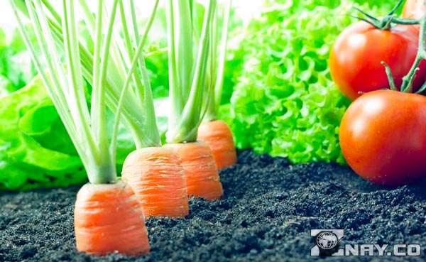 Опасность растительных плодов