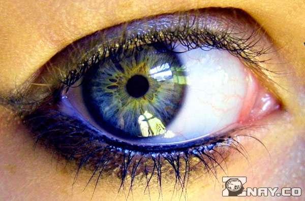 Глаз видит мир