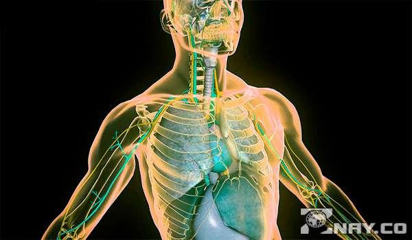 Человеческое тело и органы