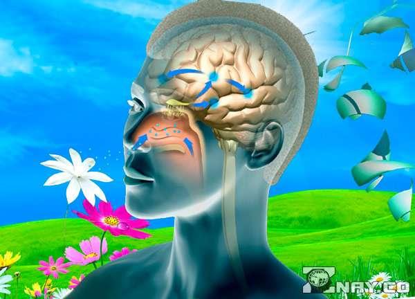 Полученные данные в мозг