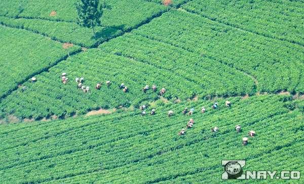 Собирательство и земледелие в старину