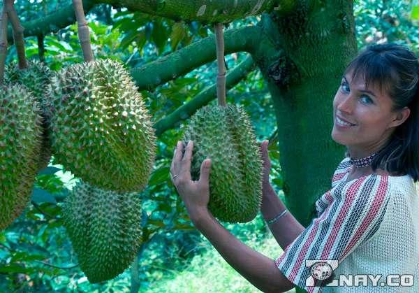 Род Durio - растение с шипами