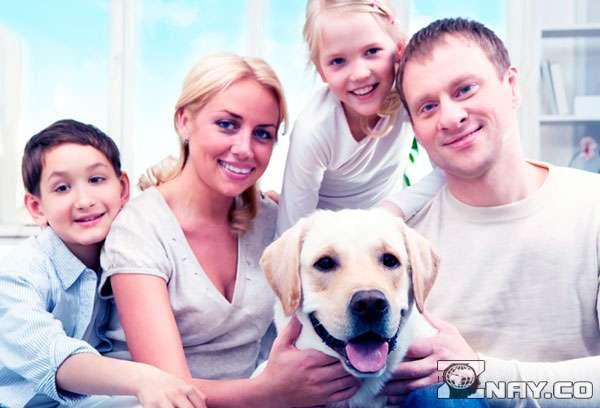 Родители не против завести собаку в доме