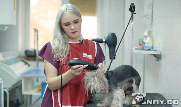 Девушка - парикмахер для собаки