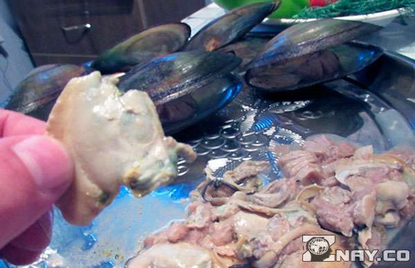 Двустворчатый моллюск на кухонном столе
