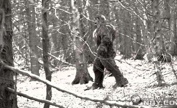 Фото снежного человека в лесу