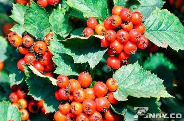 Красные полезные ягоды