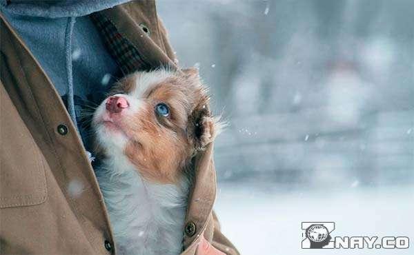 Знобит маленького щенка под курткой