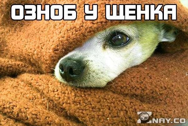 щенка знобит - под одеялом