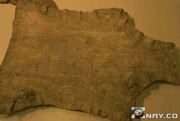 Материал из кожи оленя лесного