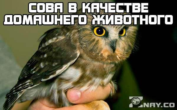Домашняя сова: чем кормить и как содержать в домашних условиях