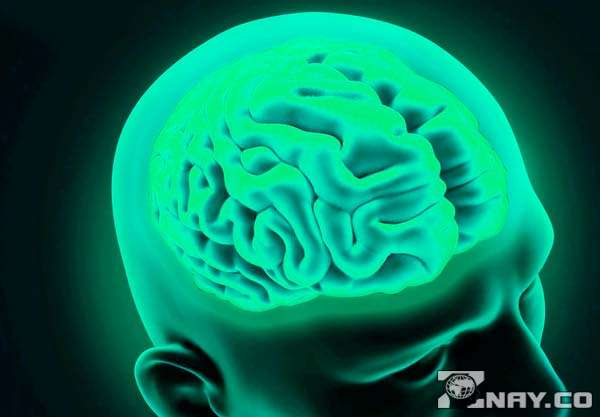 Развитый мозг человека