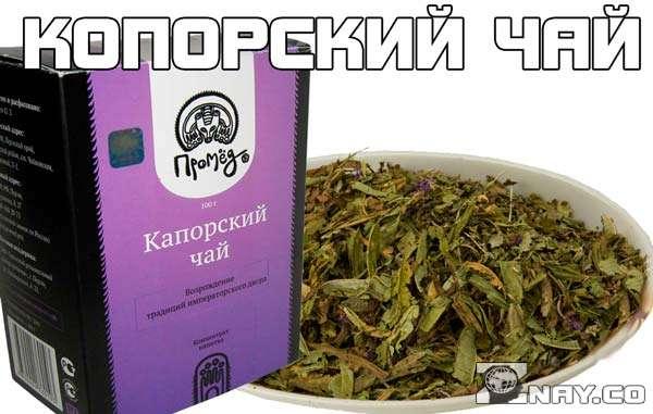 Копорский чай - полезные свойства и противопоказания