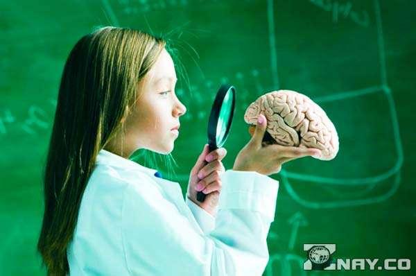 Девочка доктор рассматривает полушария мозга