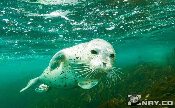 Млекопитающее в Тихом океане