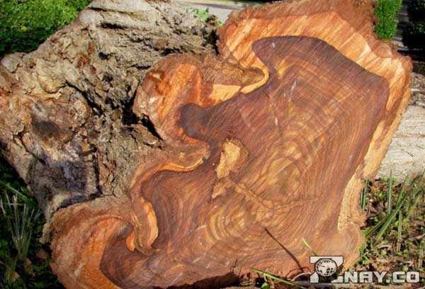 Плотная и твердая древесина