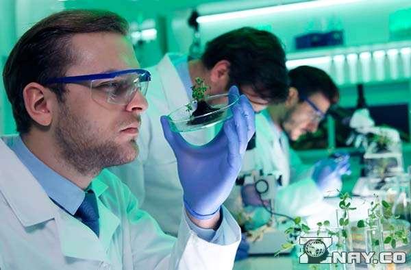 Ученые разбирают ДНК в лаботатории