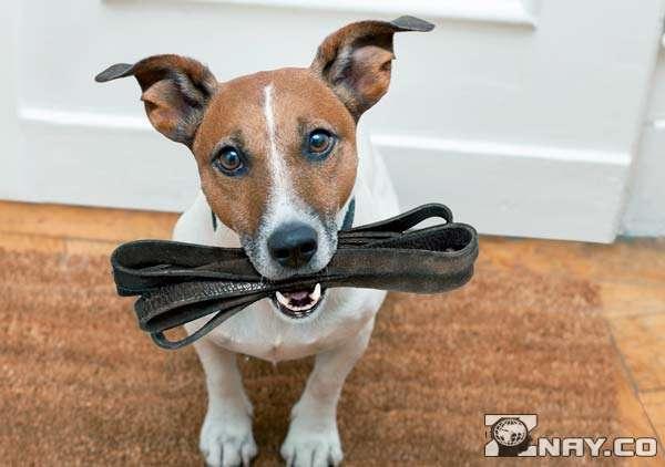 Шумная собака хочет гулять
