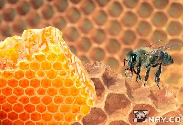 Хороший пчелиный продукт в сотах