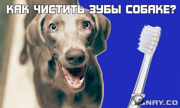 Как правильно чистить зубы собаке?