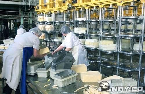 Работники сырного завода