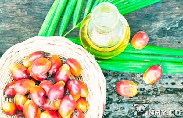 Миф и пальмовое масло
