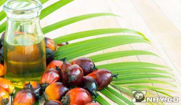 Масло и ветка пальмы