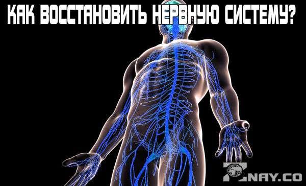 Как восстановить нервную систему?