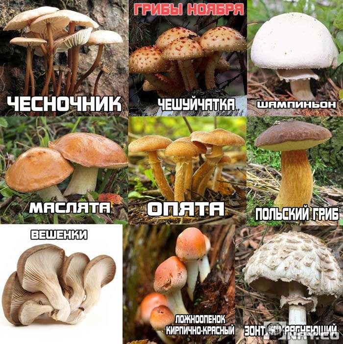 9 видов грибов: список