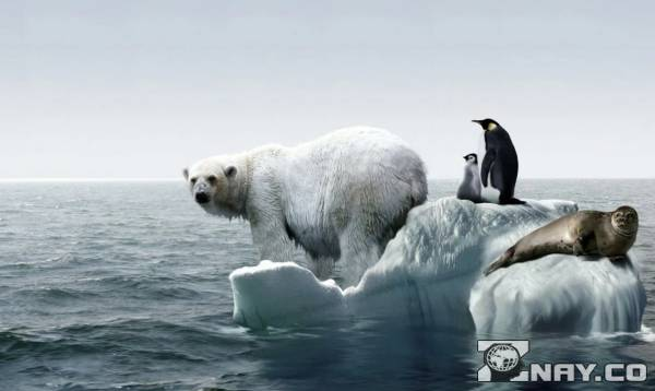Животные страдают от потепления